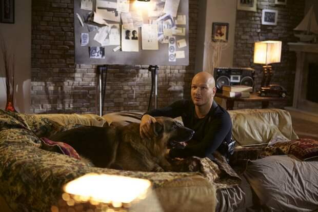 Стартовали съемки пятого сезона сериала «Пёс»