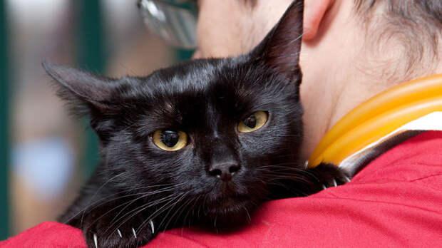 Что собаке побоку, то коту смерть: Хозяин заразил питомца коронавирусом