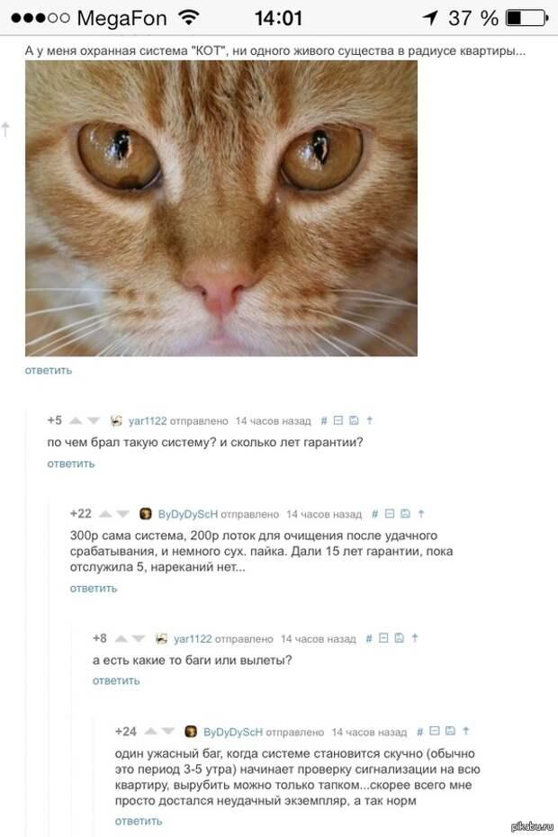 Рыжий кот - примета счастья. Михалыч шутить не любит