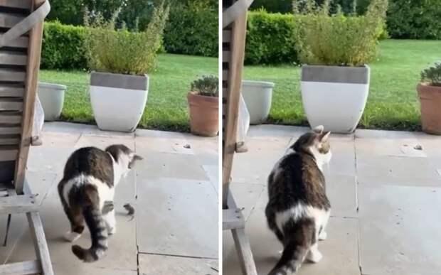 Так себе охотник: кот на секунду отвлекся и упустил свою добычу