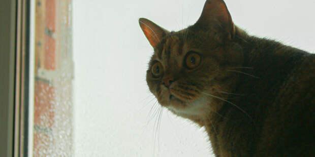 В Москве разыскиваются специалисты по подсчету бездомных котов