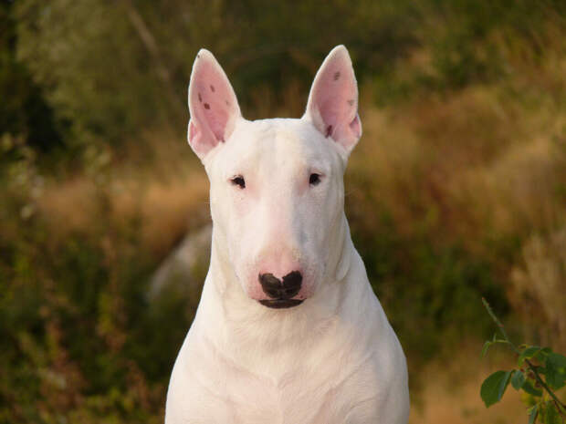 Записки ветеринара. Не бывает злых собак
