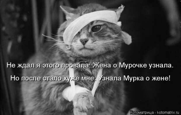 Лучшая котоматрица недели (27 фото)