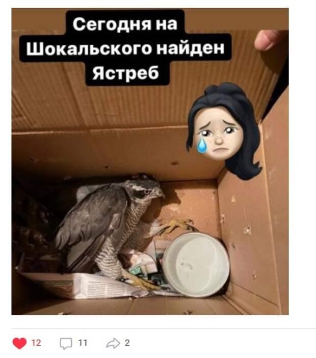 Фото дня: на Шокальского в коробке нашли раненую птицу