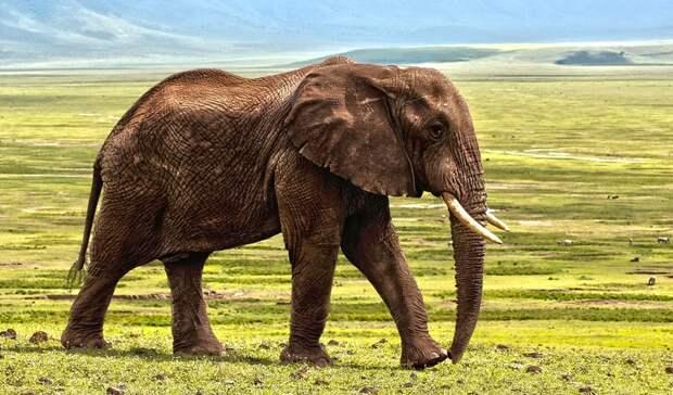 Скандальных казанских слоних могут разделить