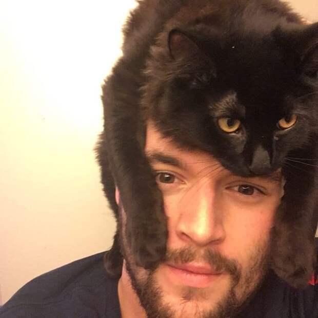 кот на голове у хозяина