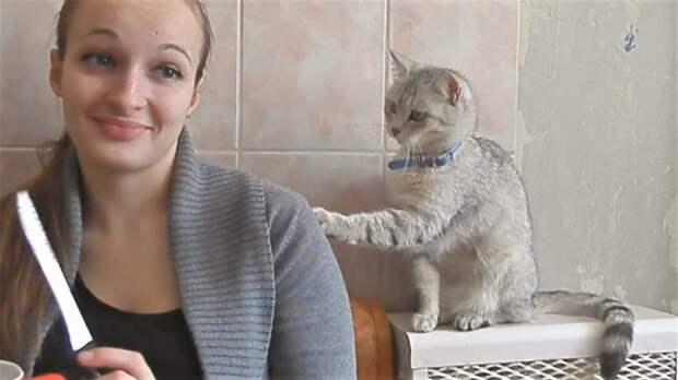 Приколы про котов и кошек  Коты просят еды