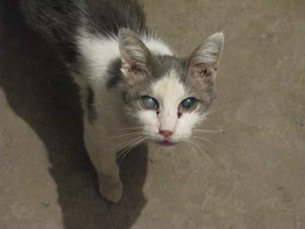 Слепой на один глаз кот никому был не нужен кот, слепой кот