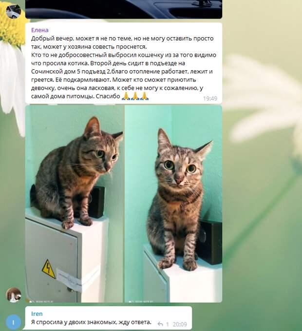 В Некрасовке кошку выгнали на улицу за мартовские концерты
