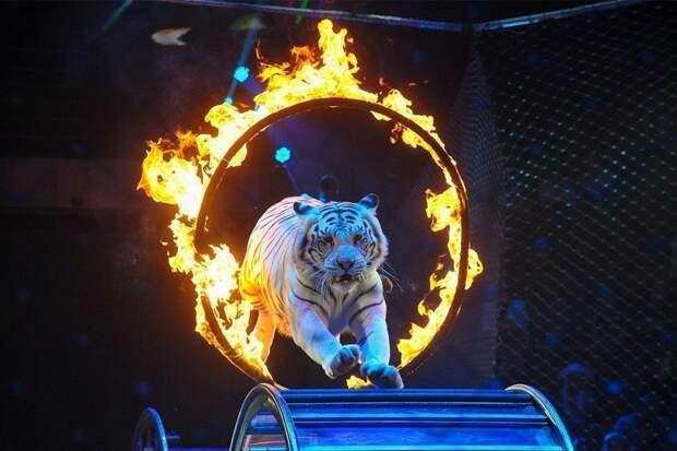 Цирковые животные будут уезжать в Крым на «пенсию»