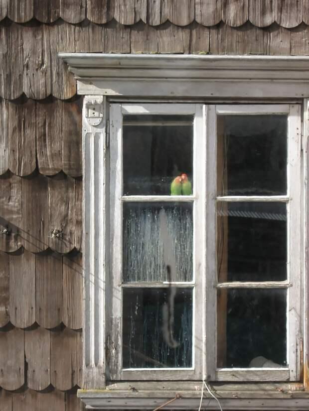 throughwindow07 Нечеловеческое любопытство: что видят в окнах животные