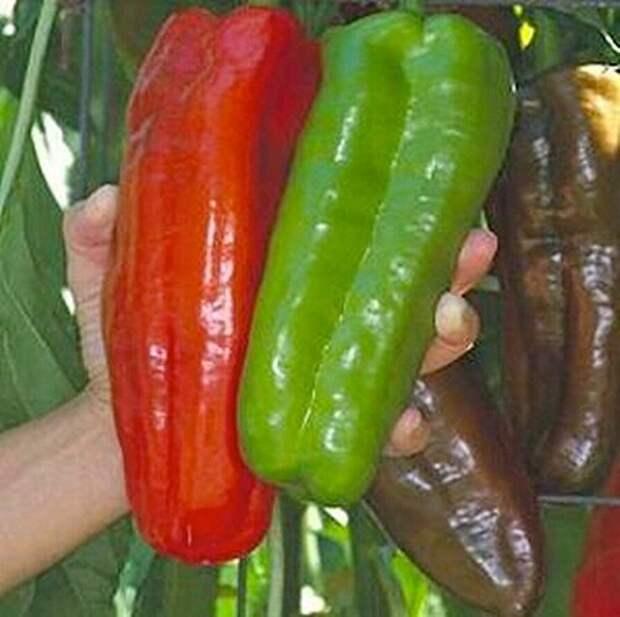 САД, ЦВЕТНИК И ОГОРОД. Вот такие овощи