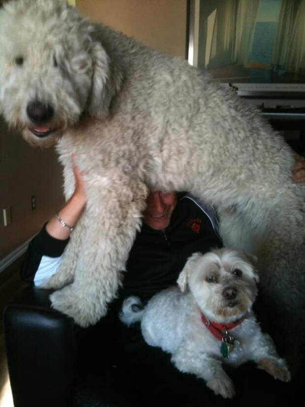 Я тоже вырасту большим, как папа! Эти забавные животные, животные, забавно, зверские шутки, смешно, собаки, ты не поверишь, фото