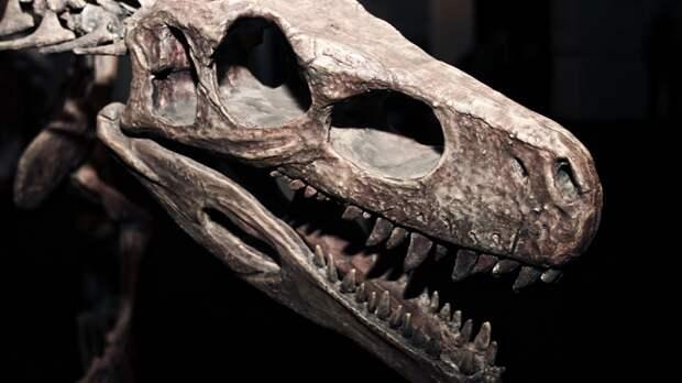 Палеонтологи описали самый древний вид рогатых динозавров из Нью-Мехико