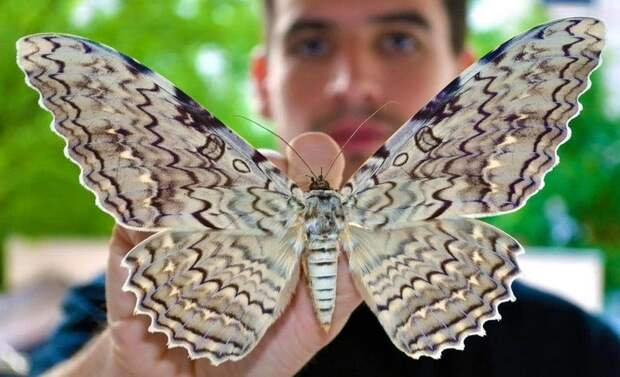 Изящные факты о бабочках