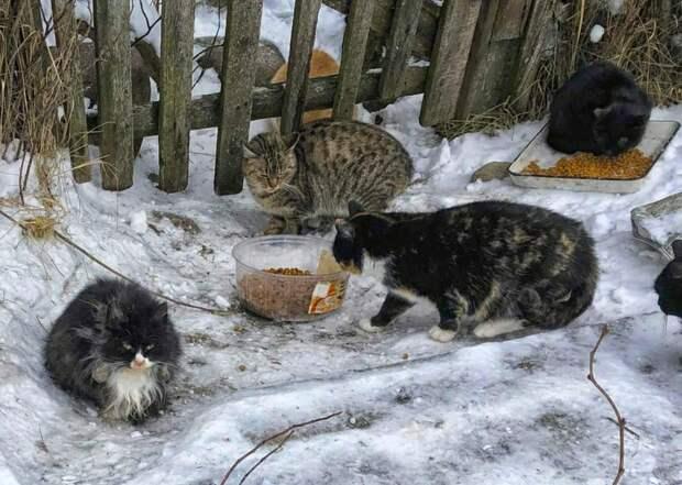 В такие сильные морозы они отчаянно выживают на улице... Корма мало, вокруг лисы и собаки... Умоляем, помогите хотя бы передержкой!!!