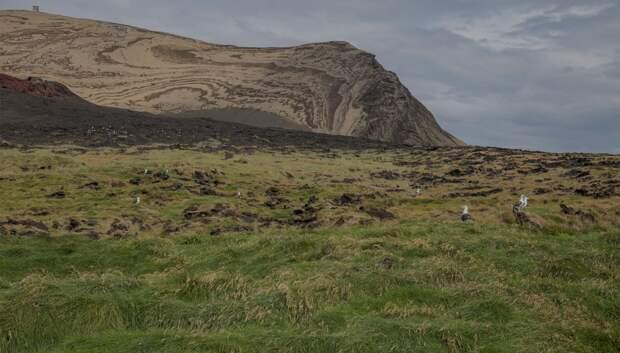 Один из самых молодых островов в мире. Фото: Исландский институт естествознания / Erling Ólafsson