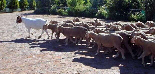 Киевский профессор: «Время свободы позади, стадо баранов ведут на убой»