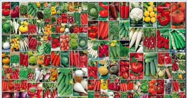 Как выбрать семена: непреложные правила