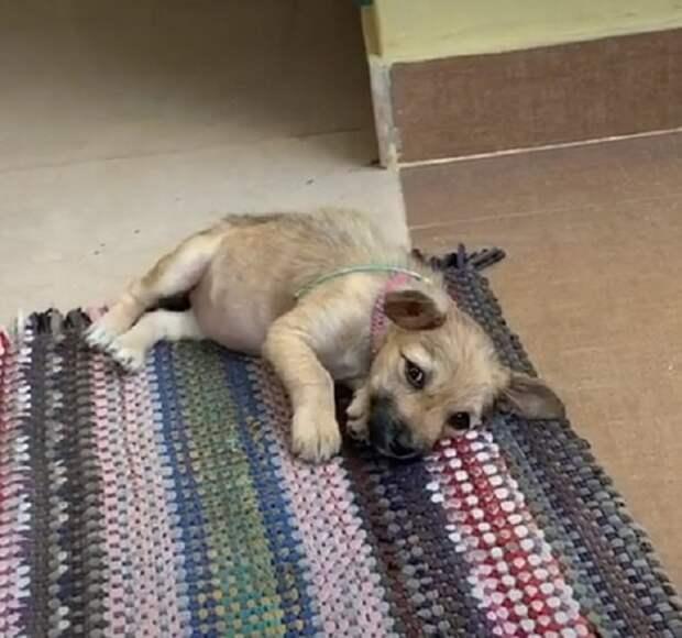 Щенок на коврике