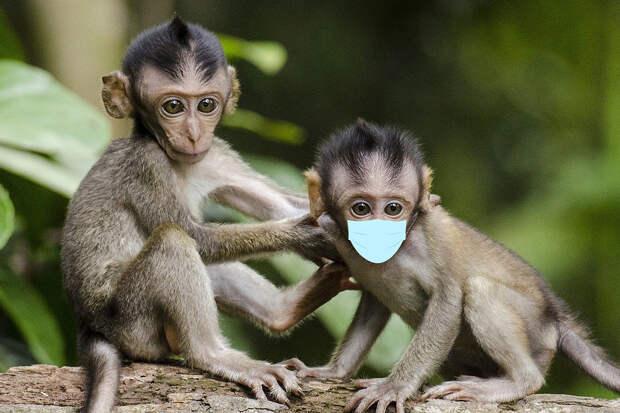 Эколог предупредил о новой пандемии хуже коронавируса