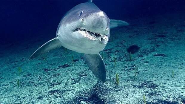 Едоки без претензий акулы, факты, хищники