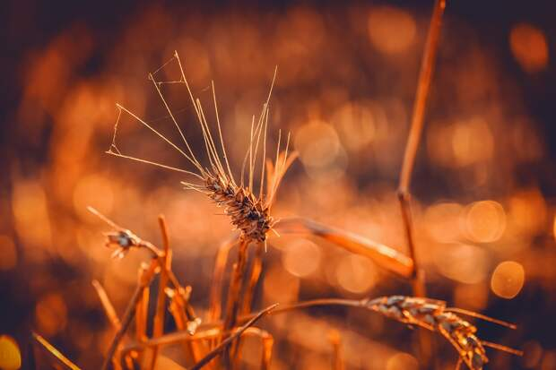 Итоги дня: низкий сбор урожая зерна из-за засухи в Удмуртии и открытие лесов для посещения