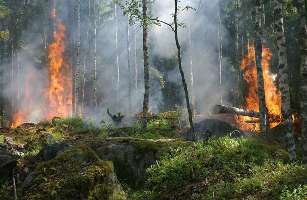 Опубликована карта пожароопасности в лесах Нижегородской области