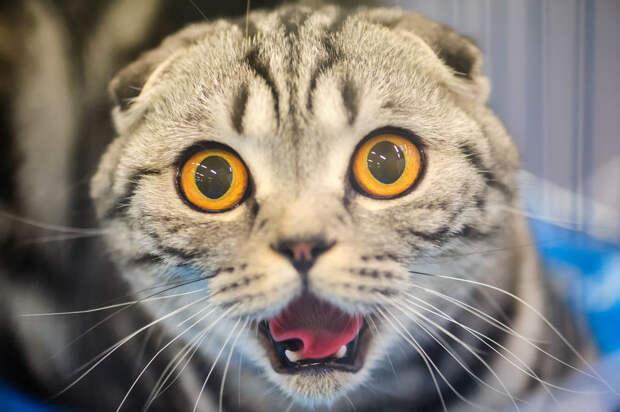 В России пересчитали служебных котов и выбрали лучшего