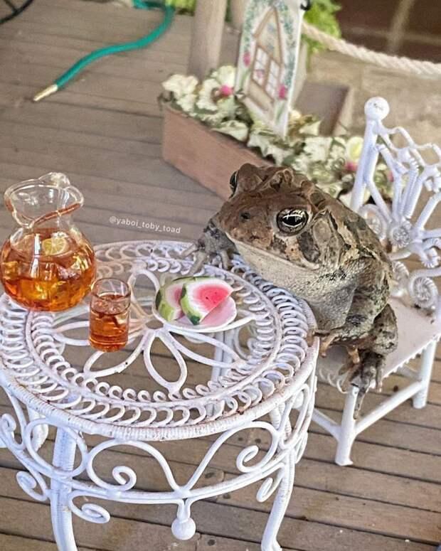 9 фото лягушки, которая живет жизнью человека