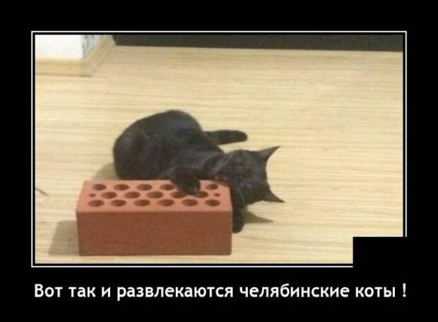 Демотиватор про сурового кота