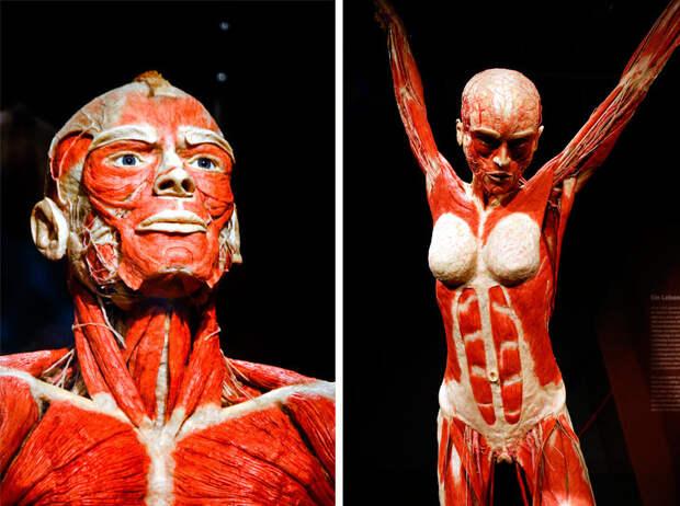 10вещей, которые доказывают, что наше тело— самая загадочная система вмире
