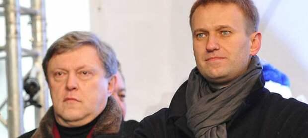 Пираньи Навального теперь грызут либерала Явлинского