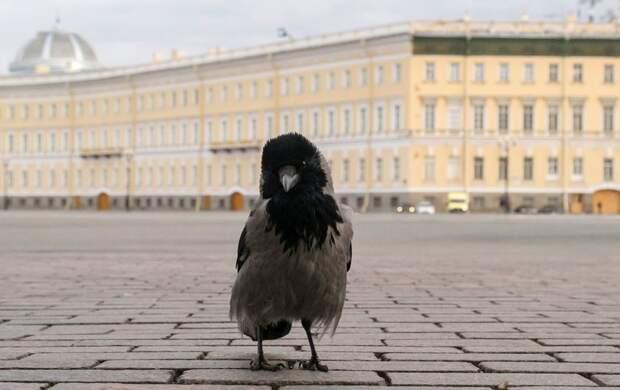 Приближаются дожди и грозы: погода в Петербурге в ближайшую неделю будет разной