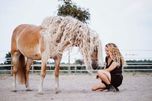 Лошадку, разумеется, уже более 50 раз сравнили с Рапунцель (это непроверенный факт) голландия, девушка, животные, красота, лошадь, фото, шевелюра