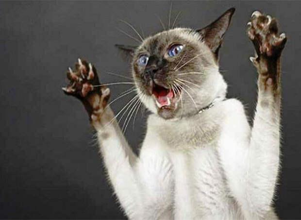 Истории о понимающих кошках
