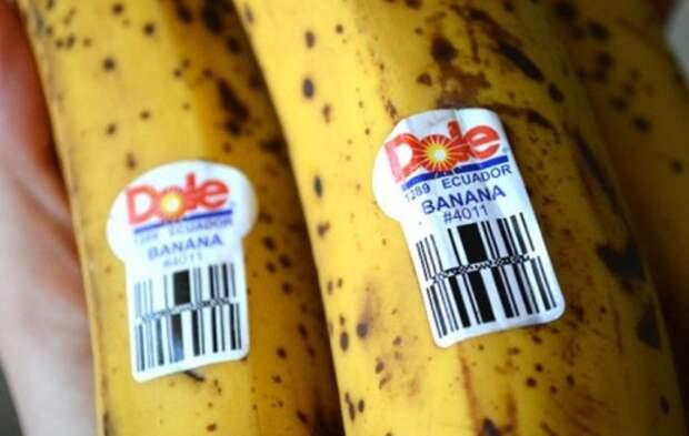 Вы хоть раз задумывались, что означают наклейки на бананах? А зря…