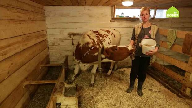 Как правильно кормить корову