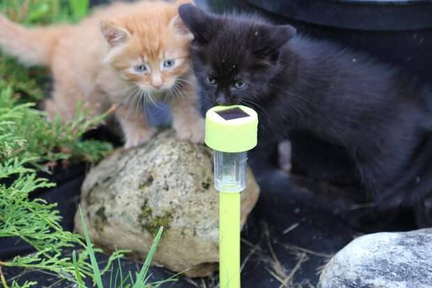 Котята с приличными манерами провели первую фотосессию на природе