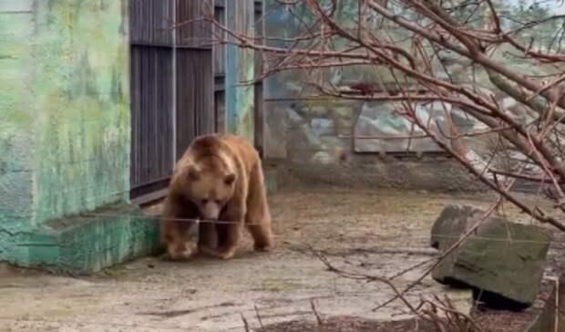 «Значит, точно весна»: медведи проснулись отзимней спячки взоопарке Ростова