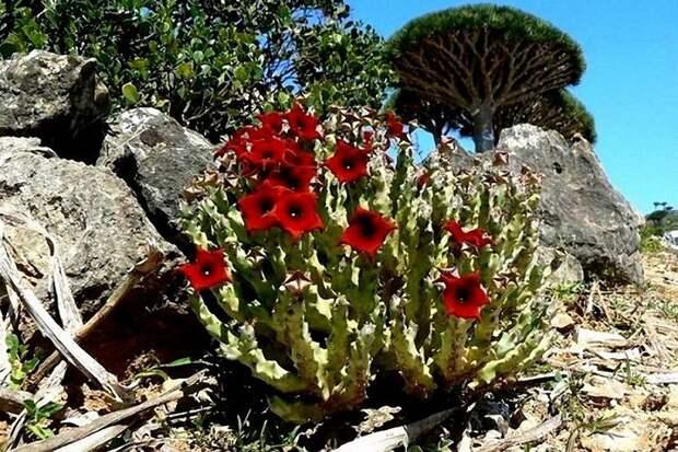 Socotra12 Удивительный остров Сокотра