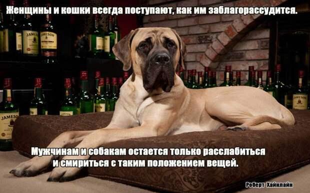 11.  афоризмы, животные, собаки