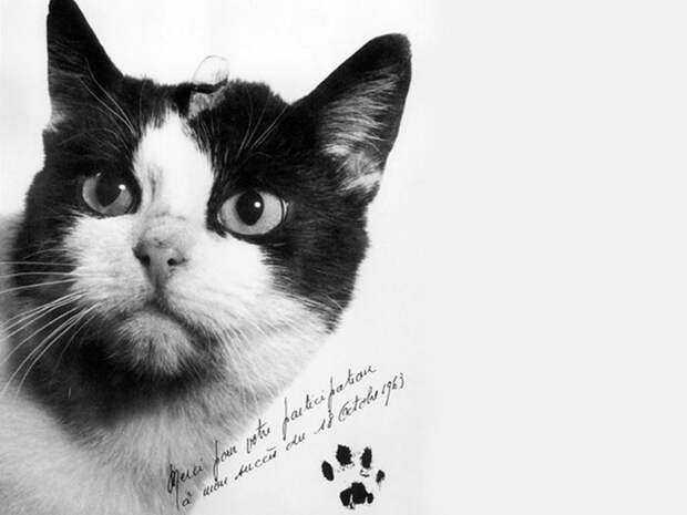 5 фото и видео первой кошки, которая слетала в космос и выжила
