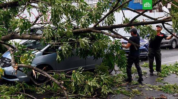 В Москве ликвидируют последствия ураганного ветра