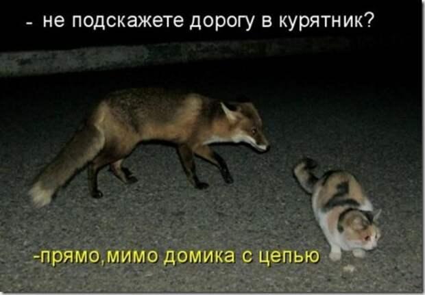 1297989336_kotomatritsa-8