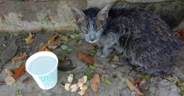 Девушка нашла среди мусора грязную бездомную кошку