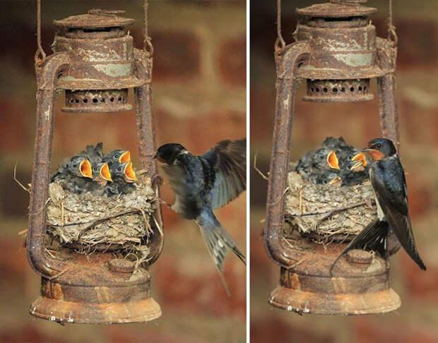 12.  красота, природа, птицы, фото