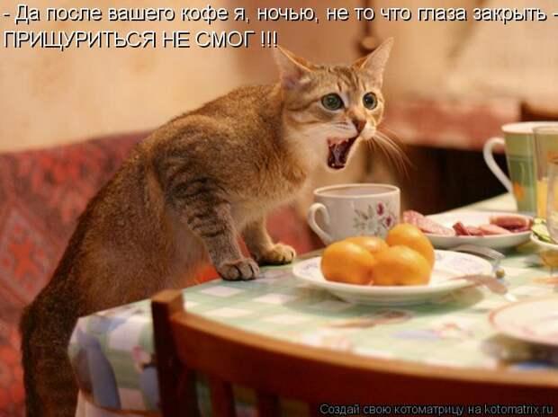 Котоматрица: - Да после вашего кофе я, ночью, не то что глаза закрыть - ПРИЩУРИТЬСЯ НЕ СМОГ !!!