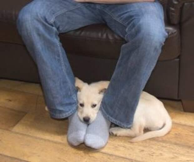 Вот почему собаки любят сидеть в ногах