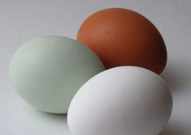 15 мифов о яйцах, в которых нет ни капли смысла